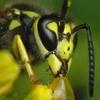 Мозаика: Пчёлка (Bee Jigsaw)