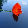Пазл: Одинокий цветок (Alone Flower)