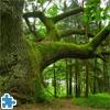 Пазл: Могучий дуб (Mighty Oak Jigsaw)
