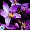 Пазл: Орхидеи (Beautiful Orchids Jigsaw)