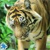 Пазл: Тигр (Tiger Jigsaw Puzzle)