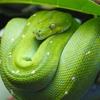 Пазл: изумрудная змейка (Emerald Boa Slider Puzzle)