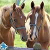 Пазл: Чудесные лошадки (Beautiful Horses)