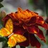 Королевство цветов: Садовые (Kingdom of the flowers: Garden flowers)