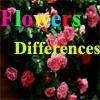 Различные цветы (Flowers Differences)