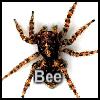 Пазл: Паук (Spider)