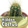 Спрятанные кактусы (Hidden Cactus)