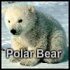 Пазл: Полярный медвежонок (Polar Bear)