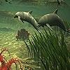 Пятнашки: Дельфины (Big dolphins slide puzzle)