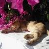 Пазл: Котик в цветах (Jigsaw: Flower Cat)