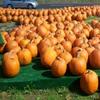 Пазл: Хэллоуин (Jigsaw: Pumpkin Market)