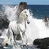 Передвижной Пазл: Дикие белые лошади (White wild horse slide puzzle)