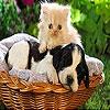 Передвижной пазл:Собаки и кошки (Cat and Dog slide puzzle)