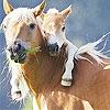 Передвижной пазл: Лошадки (Two horse slide puzzle)