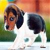 Передвижной пазл: Щенок (Shy dog slide puzzle)