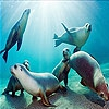 Передвижной пазл: Морские обитатели (Ocean and seals slide puzzle)