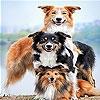 Передвижной пазл: Семейство собак (Dog family slide puzzle)