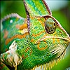 Передвижной пазл: Зеленый хамелеон (Big chameleon slide puzzle)