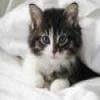 Пазл: Чудесный котик (wonderful cat)