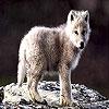 Пятнашки: Волченок (Little wolf slide puzzle)