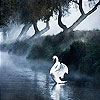 Пятнашки: Белый лебедь (White swan slide puzzle)