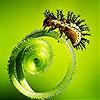Пятнашки: Букашка (Cute beetle slide puzzle)
