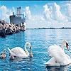 Пятнашки: Лебеди (Swan family slide puzzle)