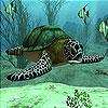 Пятнашки: Морская черепаха (Sea turtle slide puzzle)