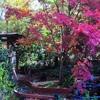 Пазл: Розовое дерево (Jigsaw: Pink Tree)