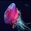 Пятнашки: Морские создания. (Sea animal slide puzzle)