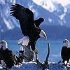 Пятнашки: Орлы (Old eagles slide puzzle)