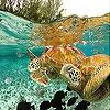 Пятнашки: Морская черепаха 2 (Ocean turtles slide puzzle)