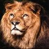 Пятнашки: Лев (Big lion king slide puzzle)
