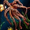 Пятнашки: Осьминог (Orange octopus slide puzzle)