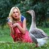 Пазл: Гусь (Goose)