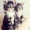 Пятнашки: Два котёнка (Two shy pussy slide puzzle)