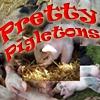 Парные картинки: Свинки (Pretty Pigletons)