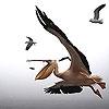Пятнашки: Пеликан (Flying pelicans slide puzzle)