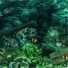 Поиск отличий: Подводные тайны (Underwater Mysteries)