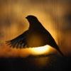 Пазл: Закат и птица (Bird)