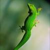 Пазл: Лизард (Lizard)