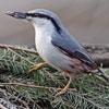 Пазл: Птица 2 (Bird)