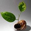 Пазл: Растение в ракушке (Plant in seashell)