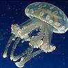 Пятнашки: Медуза (White jellyfish slide puzzle)