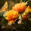Пазл: Цветы и бабочка (Jigsaw: Flowers And Butterfly)