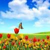 Пять отличий: Цветочный рай (Paradise of Flowers 5 Differences)