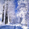 Пять отличий: Морозное утро (Frosty morning 5 Differences)