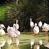 Пятнашки: Фламинго (White flamingos slide puzzle)