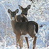 Пазл: Снег и олени (Snow and deers slide puzzle)