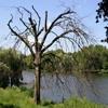 Пазл: Сухое дерево (Jigsaw: Dry Tree)